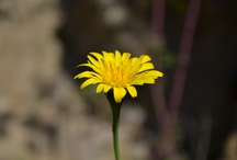 Flora...