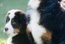 BEAUTIFUL ANIMAL PETS