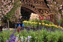Z Paris 3