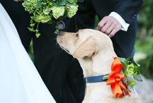 Furry Friends + Wedding / furry friends in weddings
