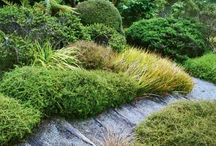 NZ Ground Covers