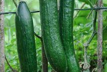 Λαχανικά-αγγούρι