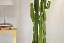 Decoração com Cactus / Espada de São Jorge / A espada de São Jorge e o Cactus gde e médio transformaram-se em uma tendência de decoração de ambientes internos e externos. E alem de resistentes, ficam lindos!