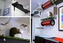 Catification / For the house :)