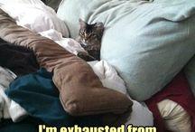 cute catz...miawww