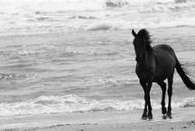 Horses / by SC C