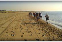 Nordic Walking  / The Nordic Walking class
