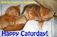 Cats and Kittens....My other best friends / Visit Browse,Pin what you like or love. ...,,no restrictions  / by Nancy Cambell