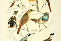 Die Vogel Welt