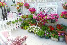 My courtyard garden