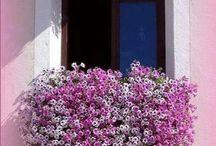 Flores y flores