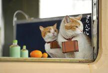 cat-japan-guide