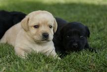 Amori di cani