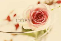 Roses /  and invite your friends <3   #roses #rose #rose-walltapestry