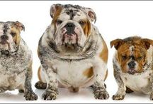 Pet Cleaning Service / UBMI providing all about pet home cleaning service