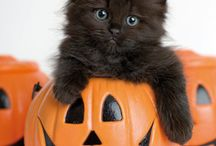 Ghoulish Halloween / #FrightNightBzz #BiteSizedBzz