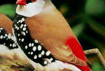 muazzam kuş