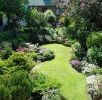 Gardens~Shady / by Becky Smith