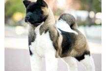 posibles perros
