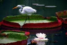 Amazing Photos of Nature / by Jasminka J