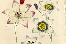 Drawn Flowers / by Laurie B