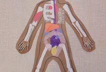 Testünk, érzékszerveink