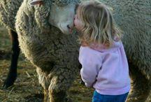 動物と人間