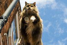 Meow / Meow meow meow