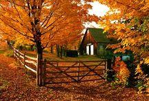Fall / Goodys