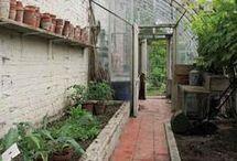 dyrke grønsaker