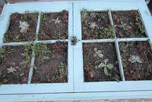 Gardening / Gardening tips, tutorials and decorating. / by Connie Foster Bissell