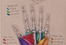 OT - Hand & Anatomy / Occupational therapy information regarding hand therapy and general anatomy.  / by Sarah Selznick