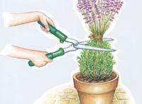 Gärtnerisches