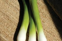 Bunching Onions