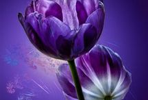 Positively Purple / by Phyllis Gillespie