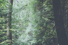 erdő mező