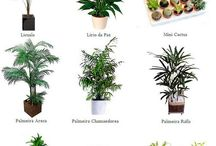 Ideas para el jardín de invierno
