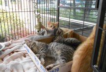 Adoptable Pets / Adoptable pets at Animal Medical Center, Lauderhill and from around Pinterest #adoptablepets