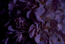 Dark Purple Weddings / Dark purple wedding ideas. From floral and reception, to bridesmaid dresses and wedding invitations!
