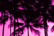 •Fuxia•