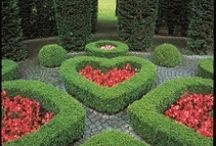 Garden / by Tres Covil