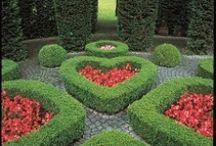 Topiery trees / Garden