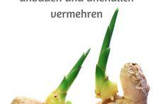 Gemüse anbauen