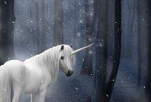 Unicorn Pixie Land