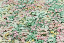 お花 / きれい