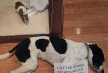 guilty animals