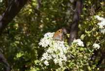 Kelebekler vadisi