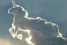 Fairy  horses ✨