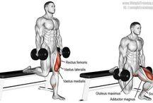 fitko stehná