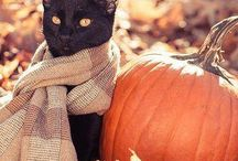 Halloween & Cats / Photos, decorations, and blog posts regarding cats during the Halloween season.